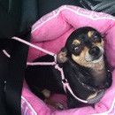 Dog Carseat Harness