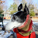Greyhound Cowl